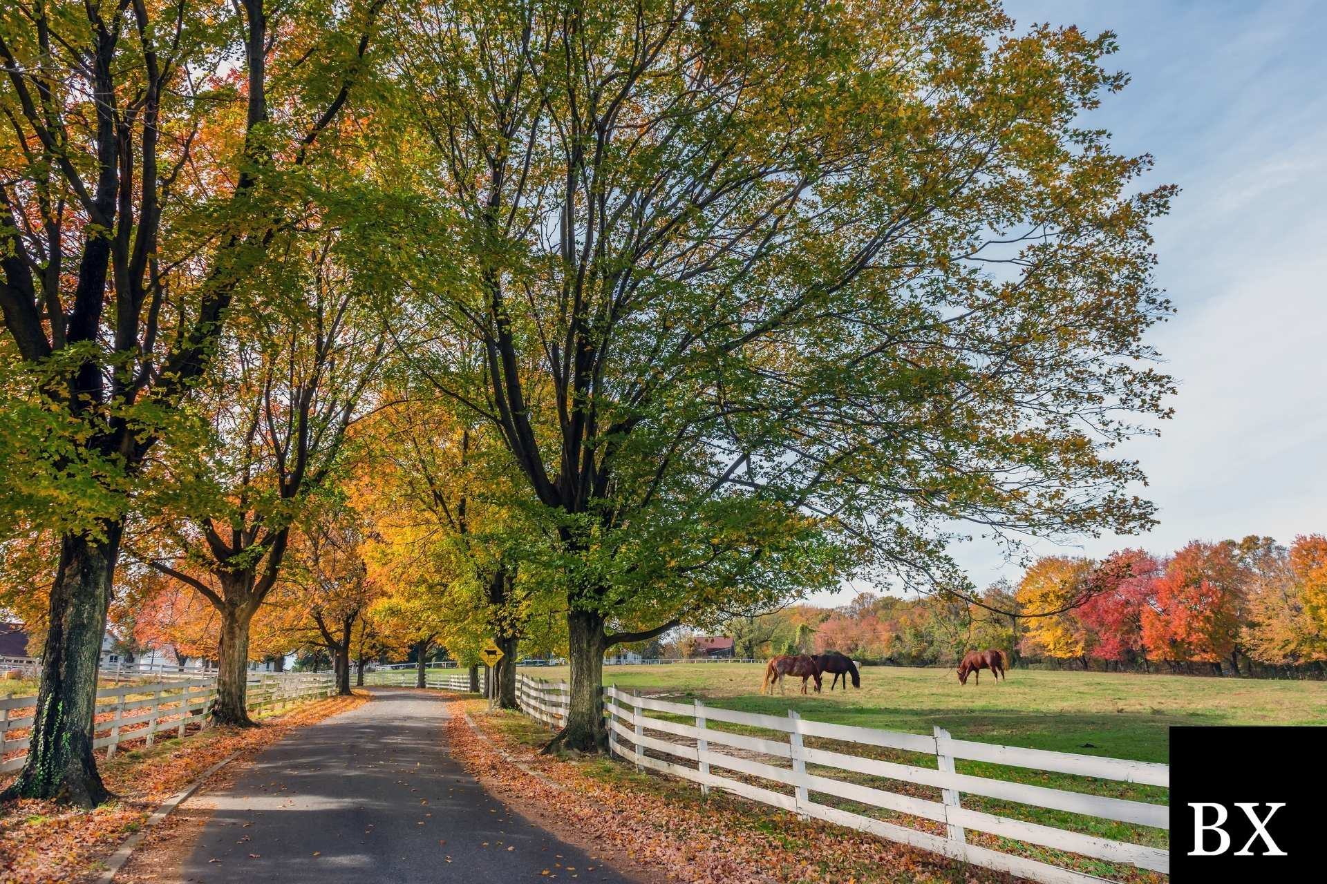 Maryland Debt Settlement Services Bond