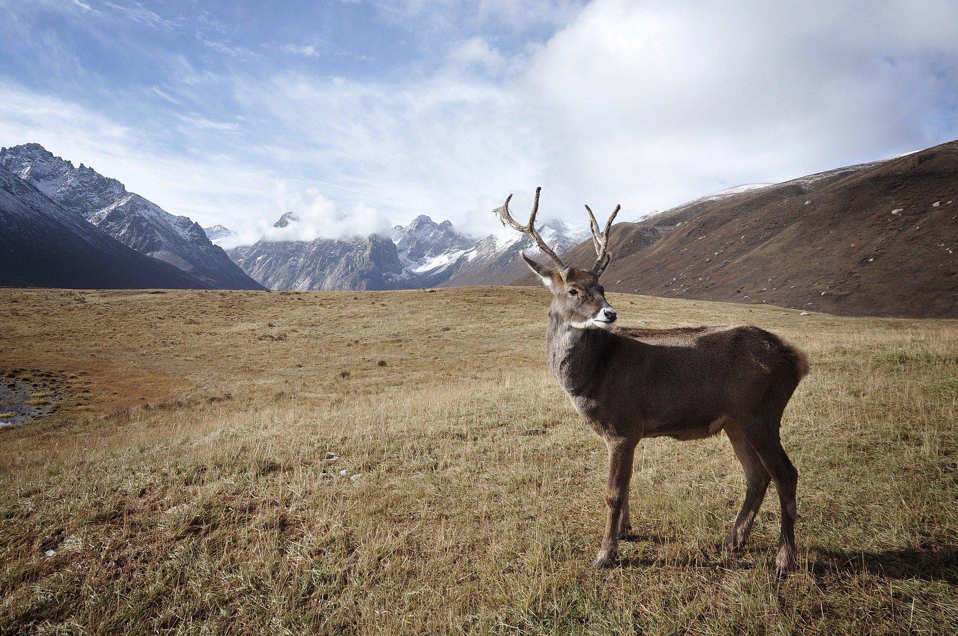 Alaska Land Use Bond